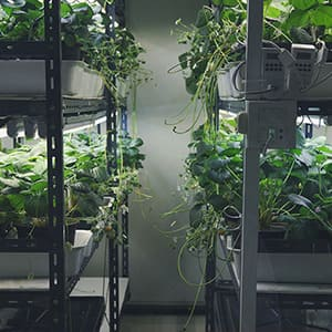 KLAS NETWORKS - LED Pflanzenbeleuchtung